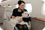 Flying with pets by private jet