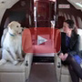 Can I take my pet on a private jet?