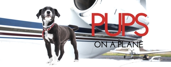 Pups on Jets