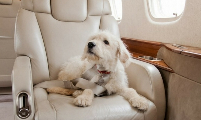 Pet Travel By Private Jet Hire  PrivateFly