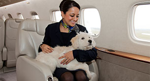 Can I take my pet on a jet?