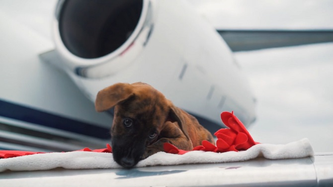 Pet Travel By Private Jet Privatefly
