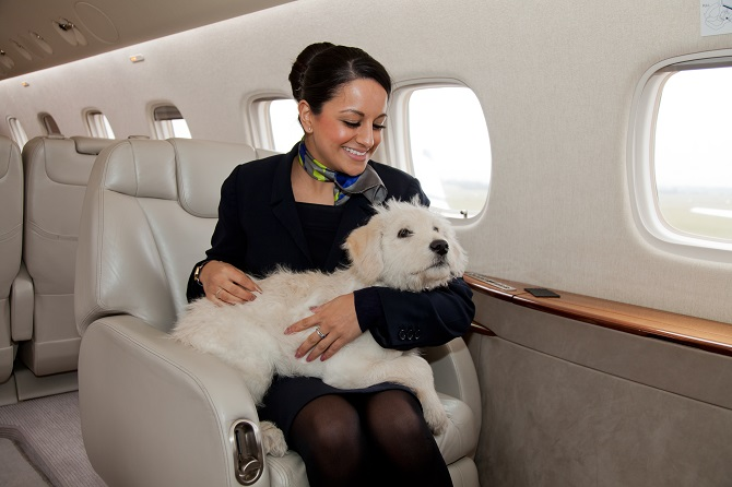 Pet travel by private jet privatefly for Airlines that allow dogs in cabin